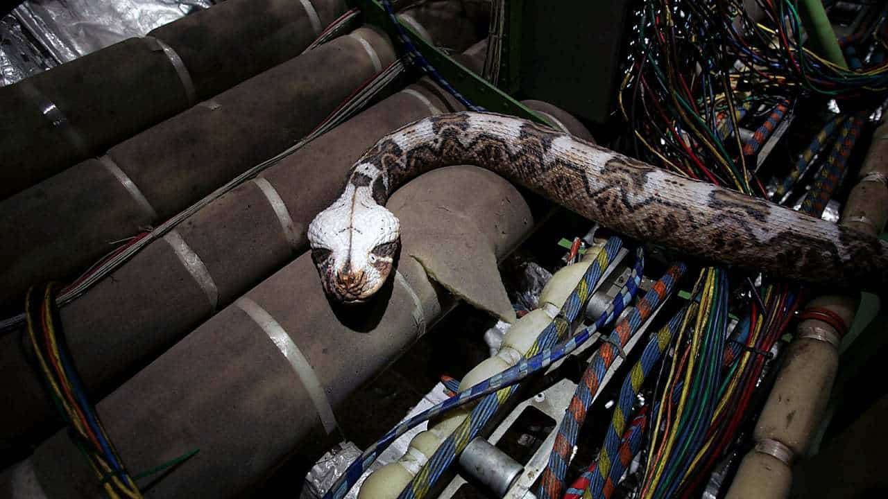 Movie Photo