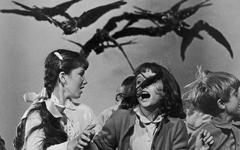 the-birds-review-1963
