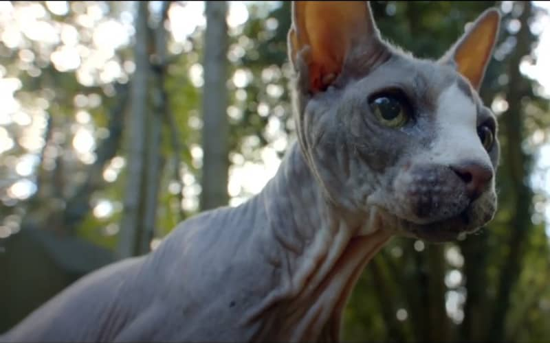 Pet Graveyard (2019) Review