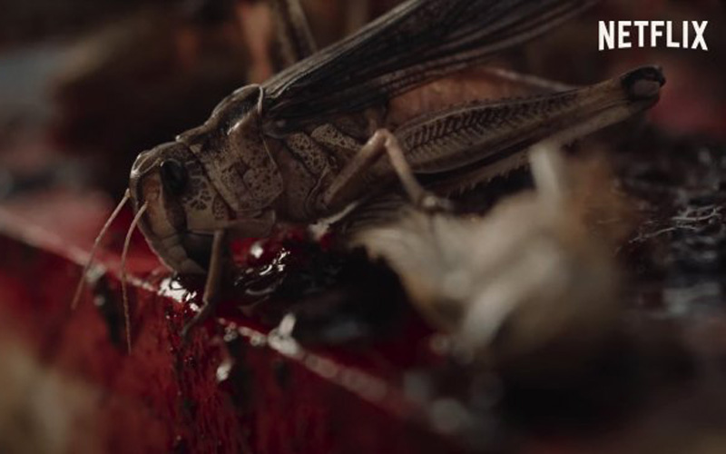 The Swarm (2021) FIRST LOOK