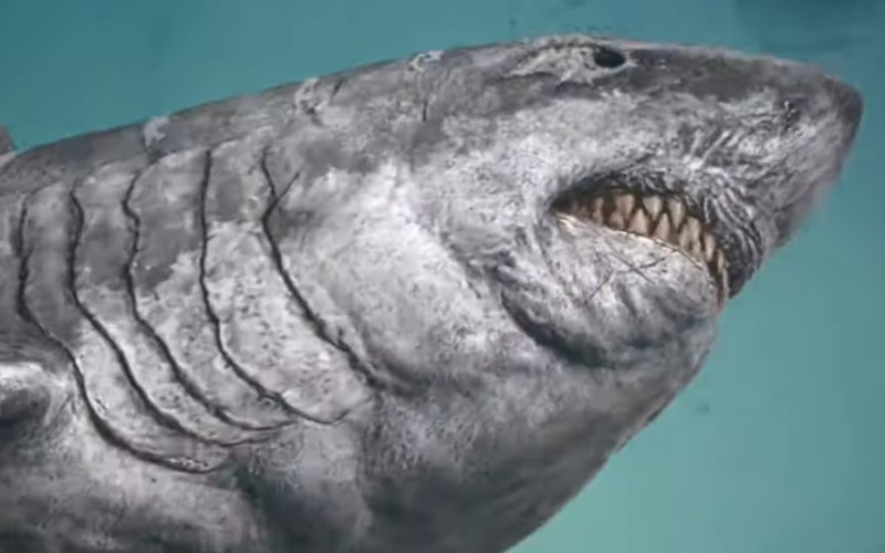 Jurassic Shark: Aquapocalypse (2021) FIRST LOOK