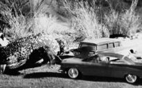 The Giant Gila Monster (1959) Review